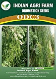 IAgriFarm (Indian Agri Farm) ODC3 Variety Moringa/Drumstick Seeds for Plantation | 500 nos