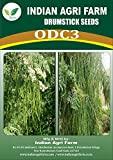 IAgriFarm ODC Variety Moringa Seeds (1/2kg 1700 NOS)
